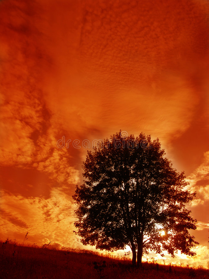 Download Tree stock photo. Image of form, curly, orange, nature - 773494