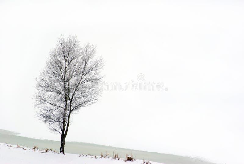 Download Tree stock image. Image of nature, tree, tracks, landscape - 7907703