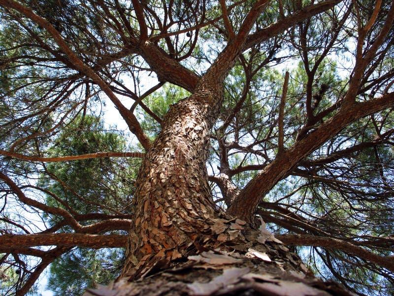 The Tree Stock Photos