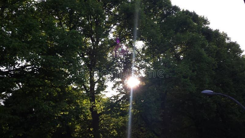Tree2 fotografering för bildbyråer