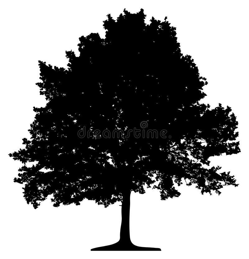 Download Tree stock illustration. Image of single, lone, stem, isolation - 932352