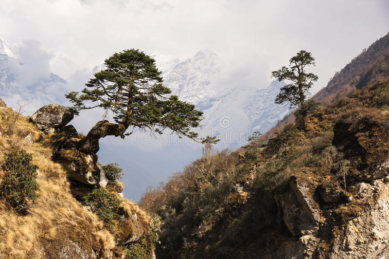 Tree above ravine royalty free stock images