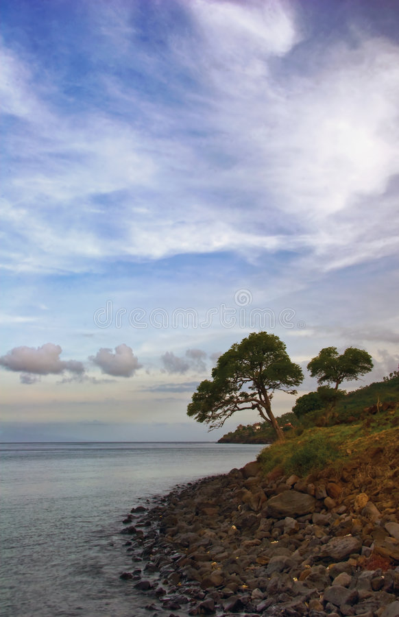 Tree above the sea stock photos
