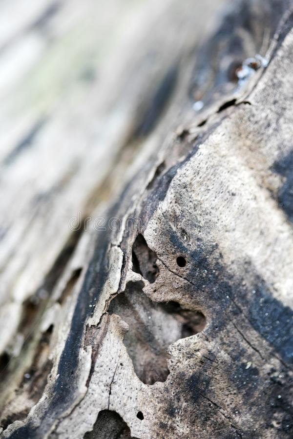 Tree abstract macro background fine art in high quality fifty megapixels stock photo