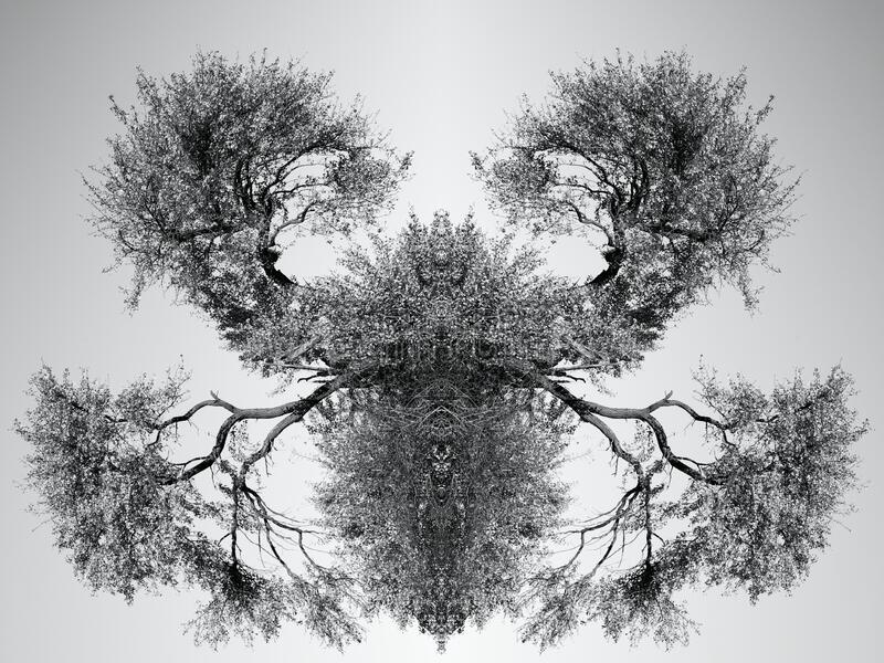 Tree abstraction stock image