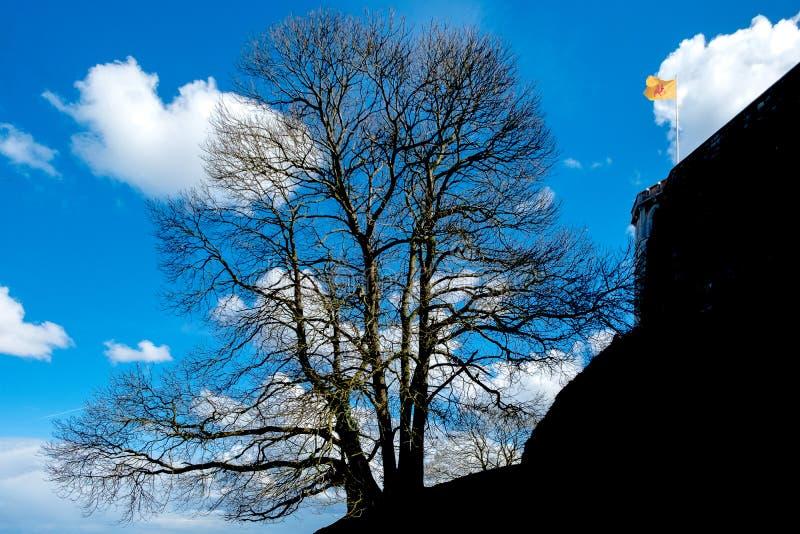 Tree near Citadel of Namur stock photos