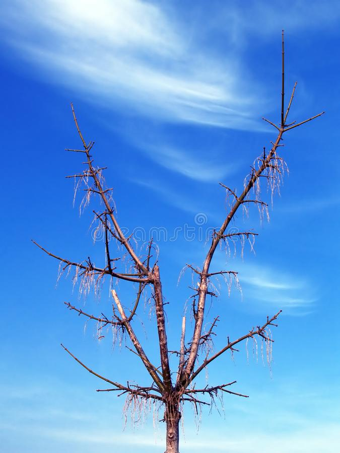 Tree against blue sky stock photography