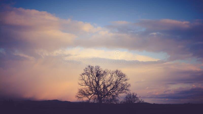 Tree against sky stock photos