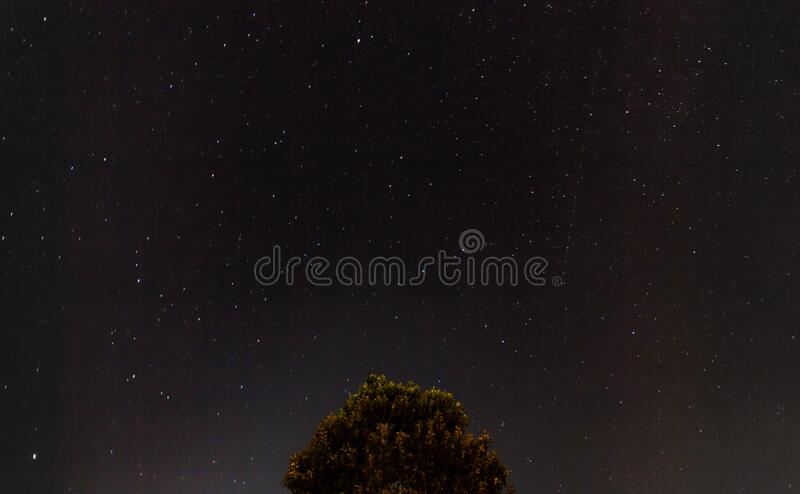 Tree against starry night royalty free stock photo