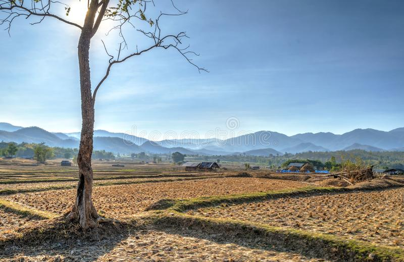 Tree against sun at rice fields, Pai, Thailand royalty free stock photo