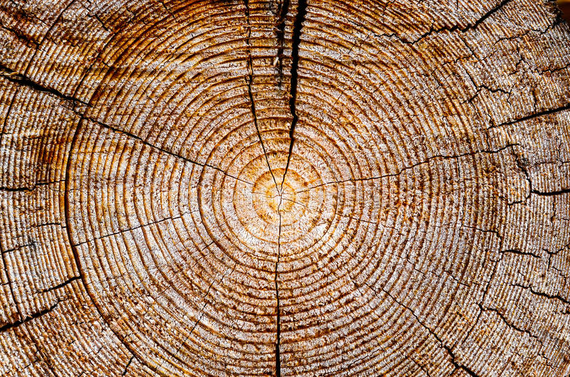 Tree age rings royalty free stock photography