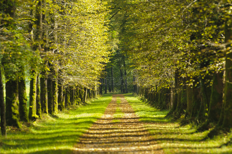 Download Tree Alley Royalty Free Stock Image - Image: 23772226