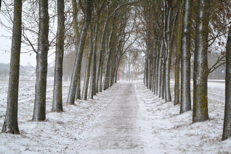 Tree alley in winter park. Russian winter. Tree alley in winter park. Russian traditional winter stock image