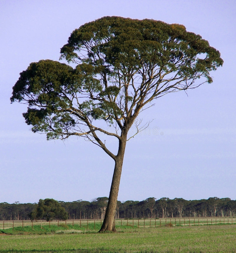 Tree alone royalty free stock images