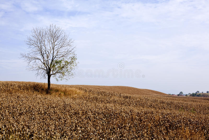 Download Tree alone stock image. Image of grassland, horizon, environment - 19080463
