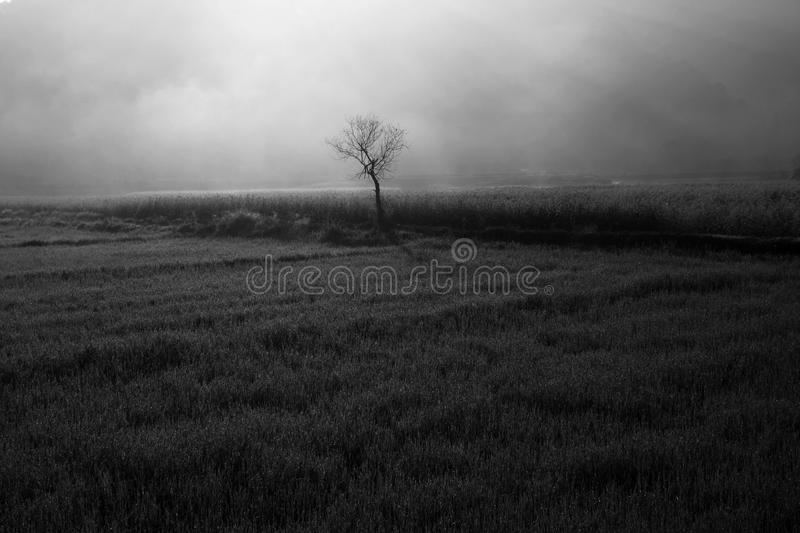 Tree. This is a alone tree stock photos