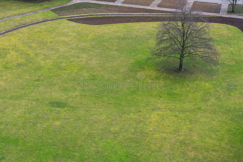 Tree Alone Grassy Field Park Outdoors Green Plain Aerial View Ab. Ove Birds Eye Environment Free stock photo
