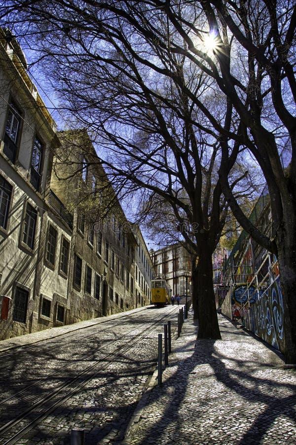 Tree along street, Lisbon, Portugal royalty free stock photography