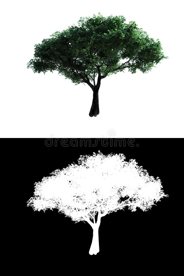Tree with alpha. Cerry tree with alpha, idel for composition vector illustration