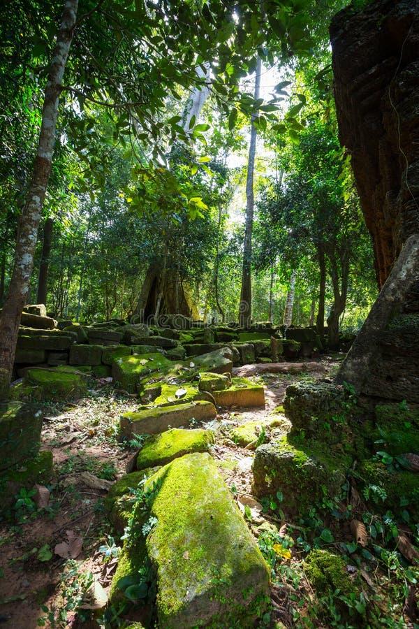 Tree in Angkor stock image