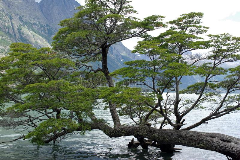 Download Tree, Argentina stock image. Image of water, america - 26244881