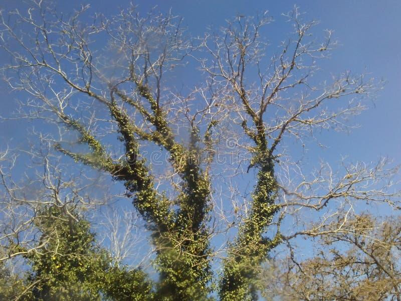 Tree art stock image