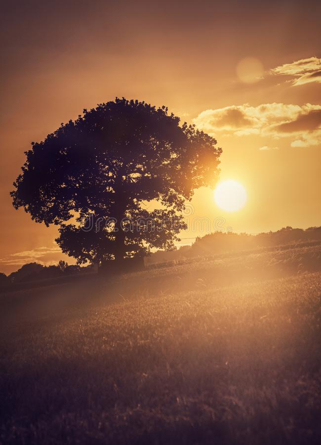 Free Tree At The Sunset Stock Photography - 105133722