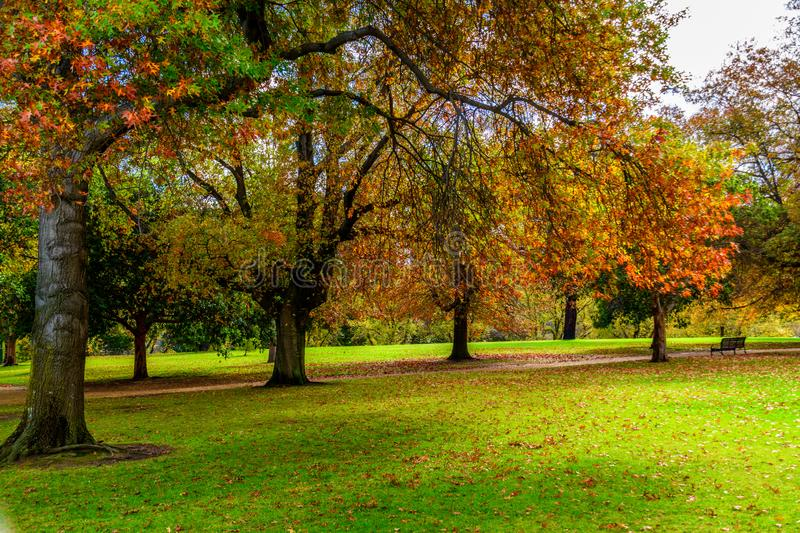 Trees in the park and fallen Autumn leaves. Colorful trees in the park and fallen Autumn leaves stock photo