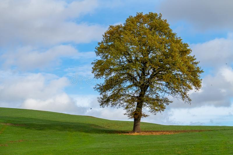 Tree in autumn, blue, cloudy sky. stock photos