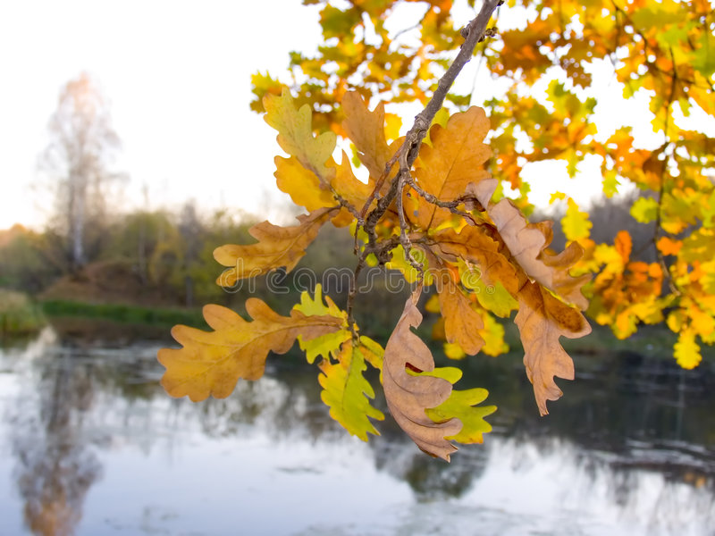 Tree With Autumn Leaves Stock Photo