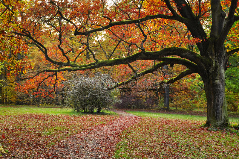 Tree autumn nature royalty free stock images