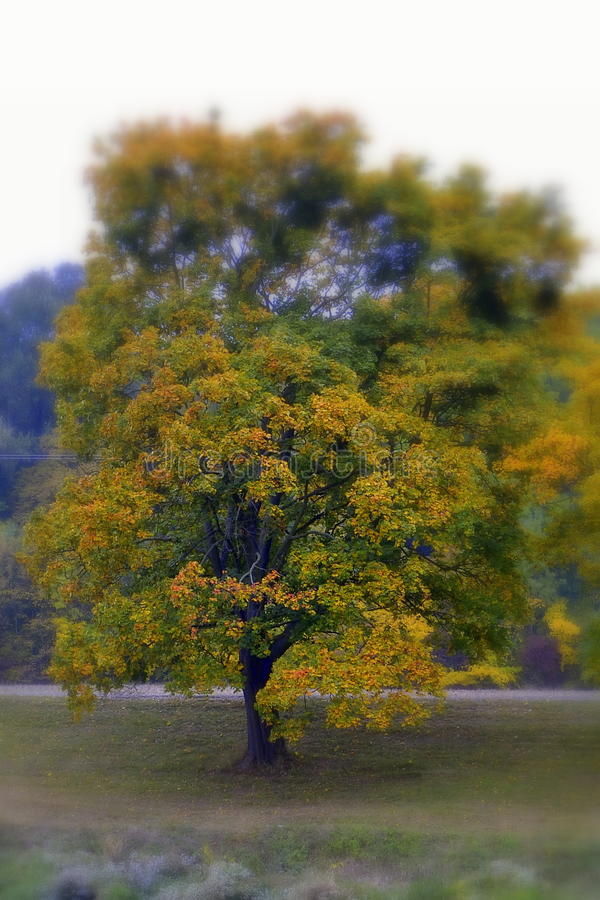 Tree on autumn stock images