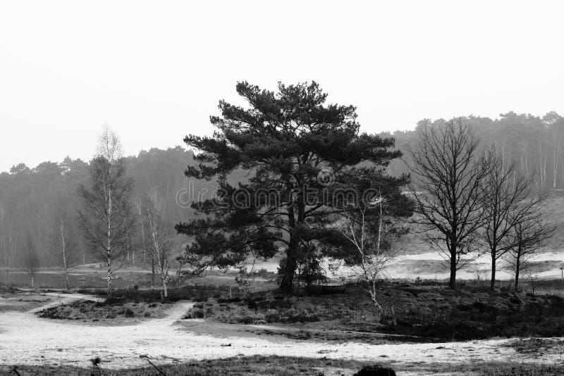Tree av liv arkivfoto