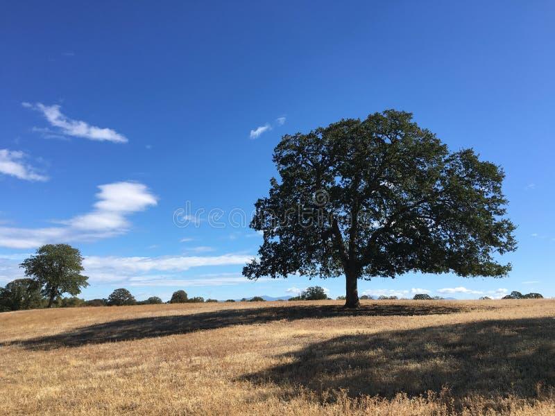 Tree av liv arkivbild