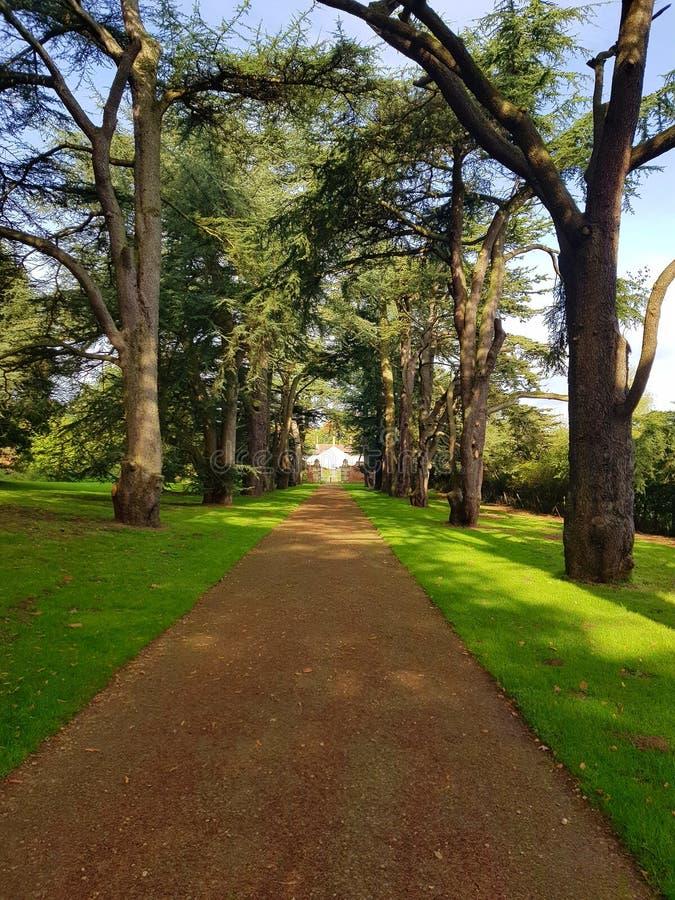 tree avenue clumber park nottinghamshire stock images