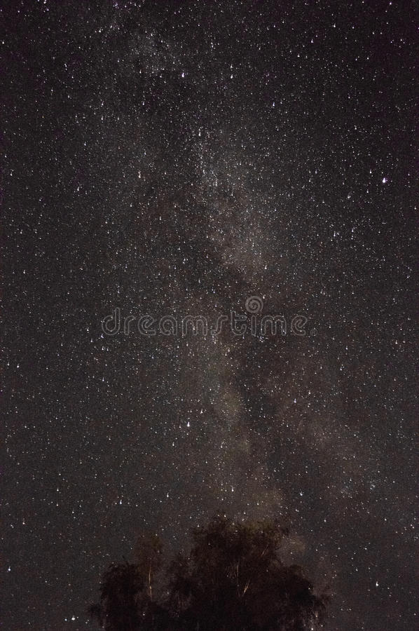 Tree on a background of the Milky Way royalty free stock photos