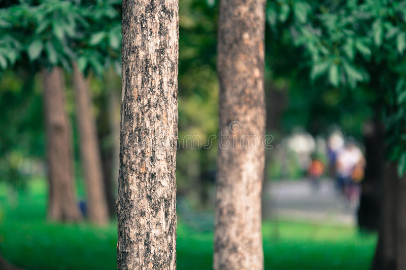 The tree background in park of Thailand stock images