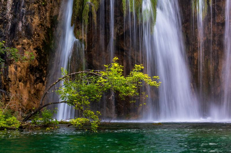 The tree on the background of waterfall. Plitvice Lakes National Park, Croatia royalty free stock photography