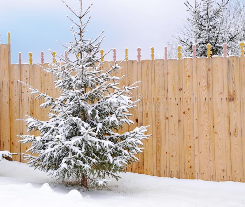 The tree on the background of a wooden fence the first snow stock photography