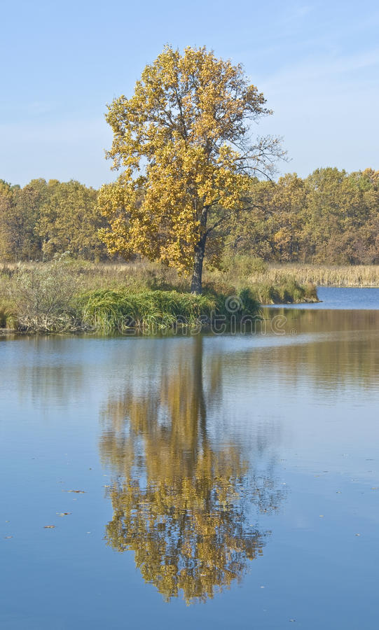 Download Tree on the bank stock image. Image of lake, water, yellow - 12855623