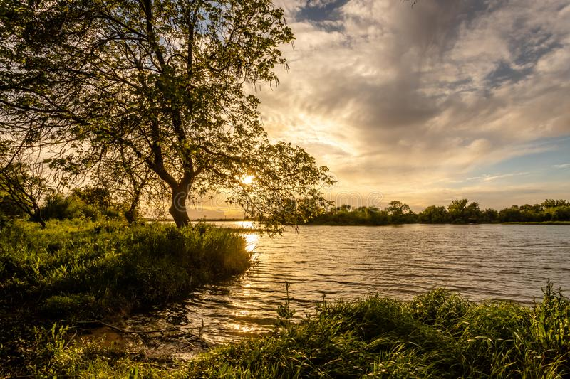 Tree on the banks of the river Tejo Tagus in Cartaxo, Santarem, Portugal.  royalty free stock photography