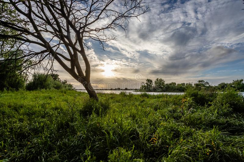 Tree on the banks of the river Tejo Tagus in Cartaxo, Santarem, Portugal.  royalty free stock photo