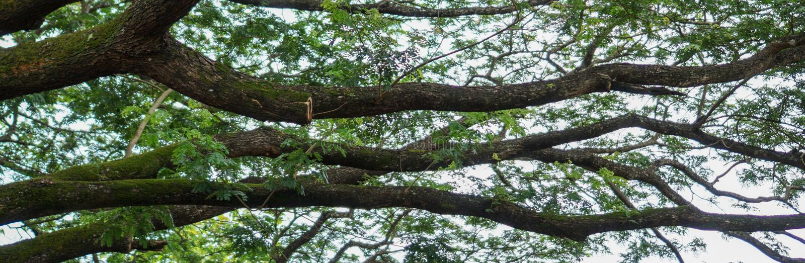 Tree banner with large branches extending out stock image