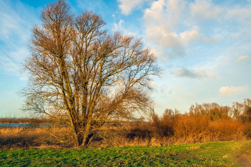 Tree with bare branches in the light of the setting sun stock image