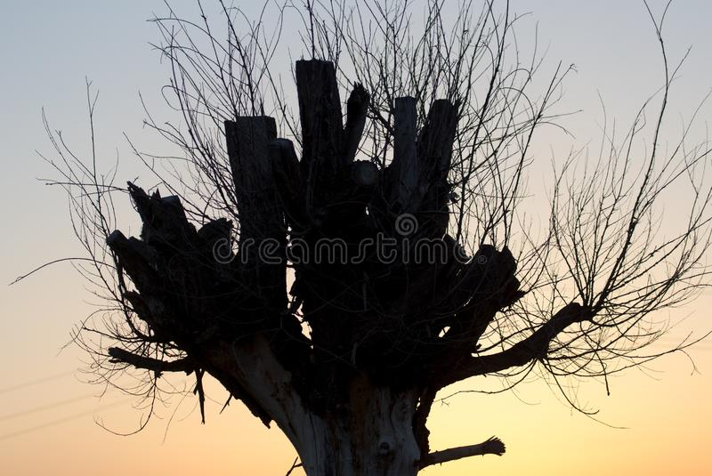 Tree with bare branches at sunset royalty free stock photos