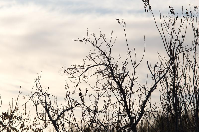 Tree with bare branches at sunset royalty free stock images