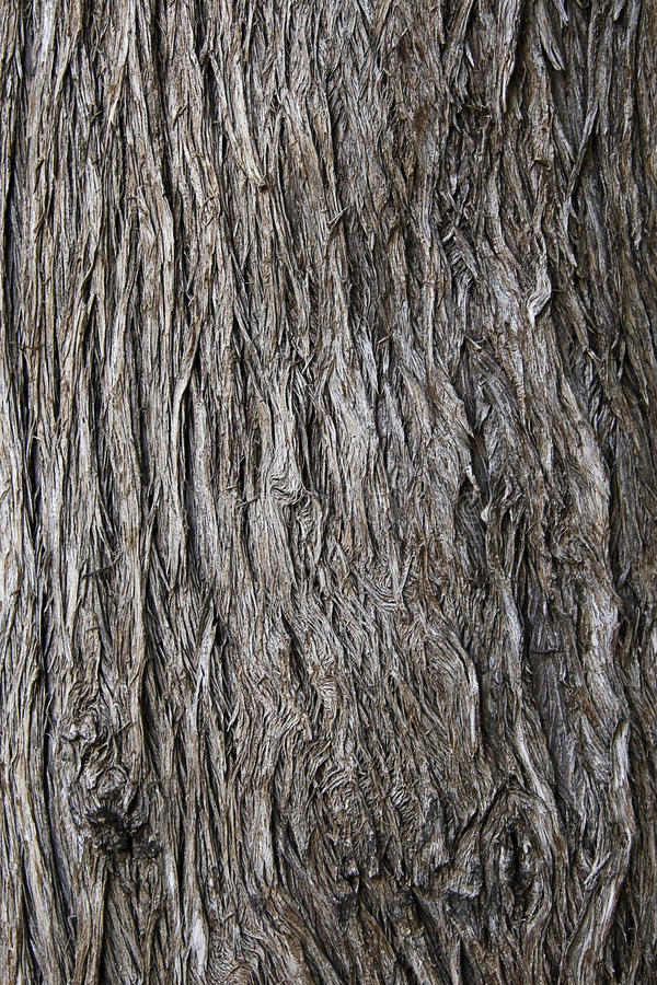 Download Tree bark stock photo. Image of background, efect, macro - 11393824