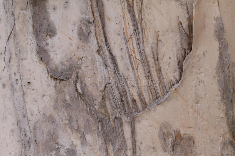 Download Tree Bark stock photo. Image of natural, background, gray - 12338550
