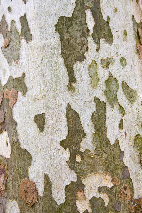 Download Tree bark stock image. Image of tree, camo, green, camouflage - 13928055