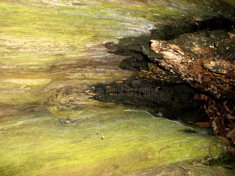 Tree Bark 14 Royalty Free Stock Images
